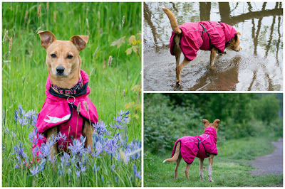https://zoephee.blogspot.com/2016/05/an-awesome-raincoat-hurtta-torrent-coat.html Hurtta torrent raincoat https://zoephee.blogspot.com