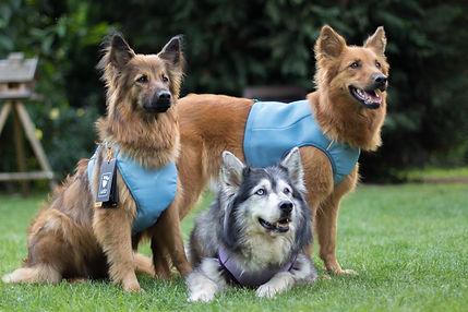 Image result for Hurtta Motivation Cooling Vest Blue