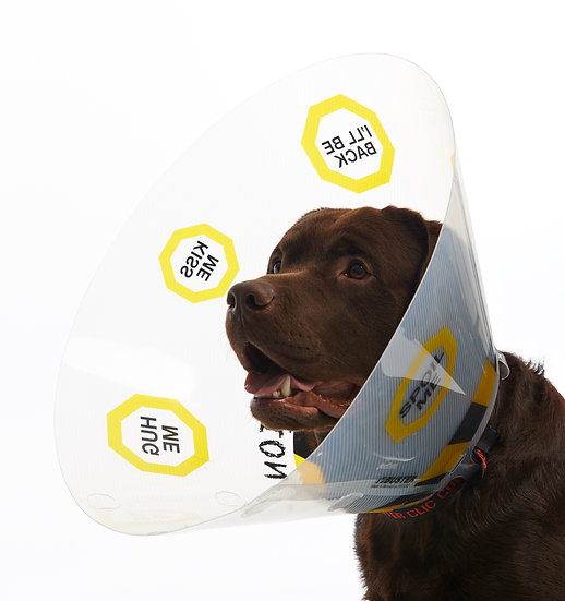 BUSTER Recovery Collar/Cone 10 Pack