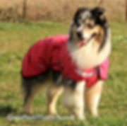 http://blog.crosspeakproducts.com/hurtta-torrent-coat-review/ torrent dog raincoat hurtta