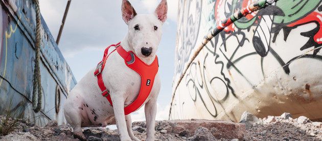 A Love Note to City Dogs