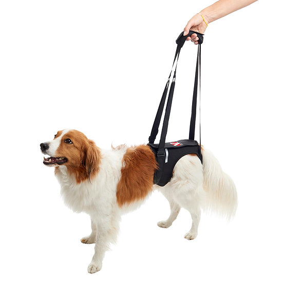 KRUUSE Rehab Lifting Harness for Dogs, Hind Legs
