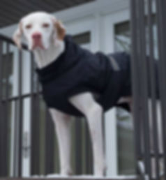 http://moderndogmagazine.com/blogs/modern-pets/life-saving-dog-coat modern dog magazine hurtta cold weather hurtta dog coat