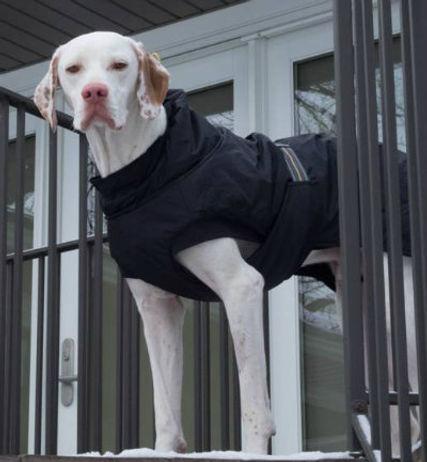 http://moderndogmagazine.com/blogs/modern-pets/life-saving-dog-coat modern dog magazine hurtta cold weather hurtta dog coat
