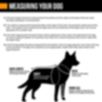 Measuring Your Dog.jpg