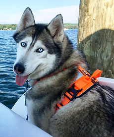 https://tailsfromthetrails.com/2016/07/10/review-hurtta-life-jacket-dazzle-harness/ dog harness hurtta active harness