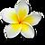 Цветок лилавади