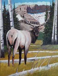 Elk in View