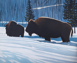 Winter Bulls