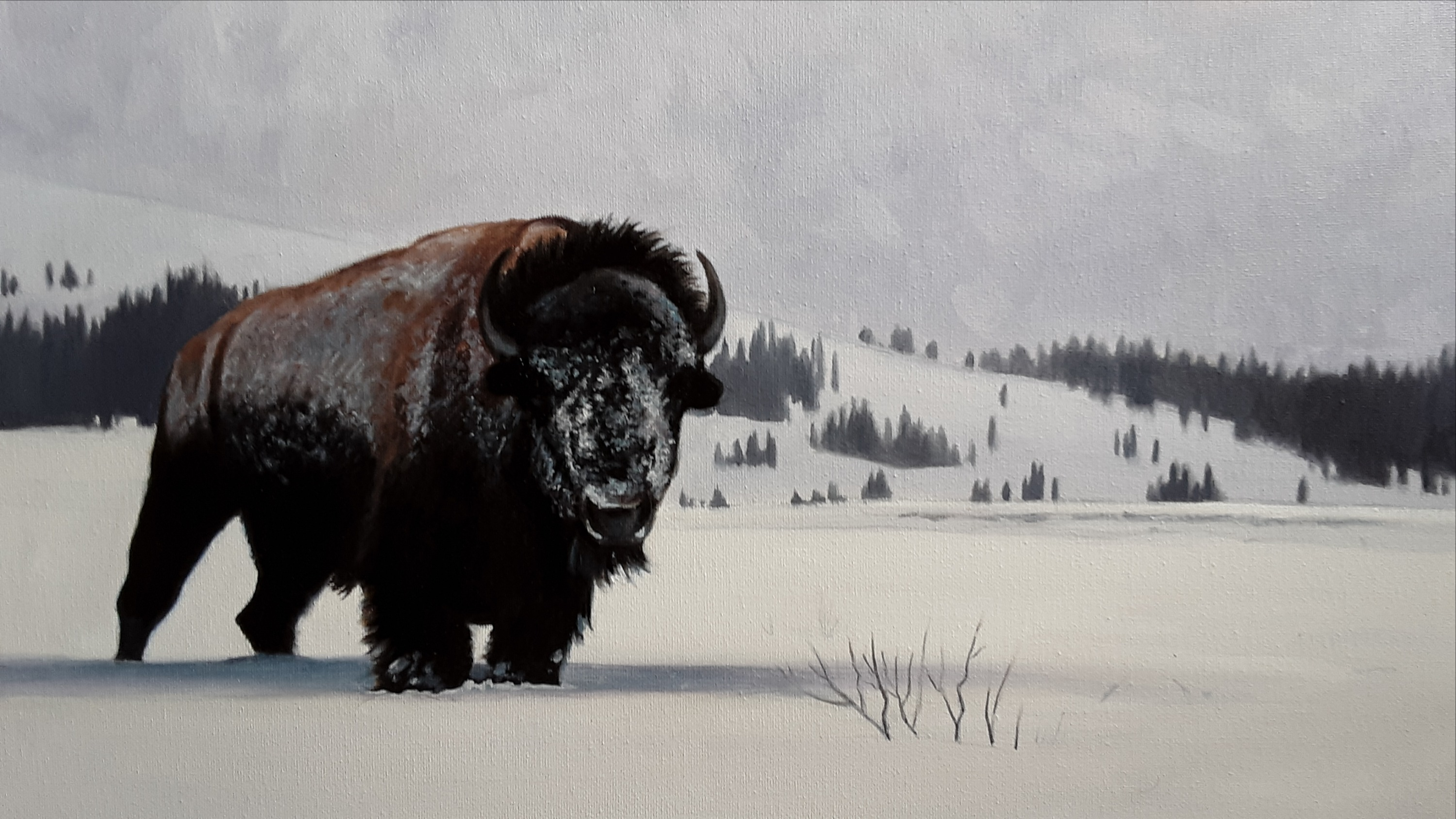 Winter Bull-SOLD