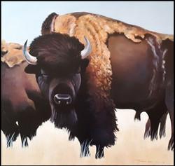 Shaggy Buffalo