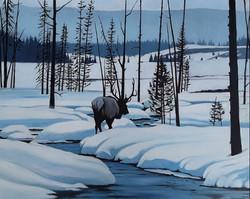 Winter Elk in Yellowstone