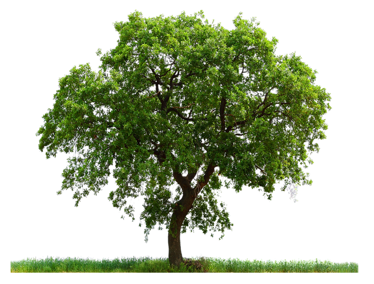 png_tree_ab_by_paradise234-d5gy7ul.png