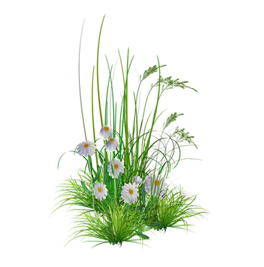 png_garden_flowers__by_kmygest-d5f8goi.p