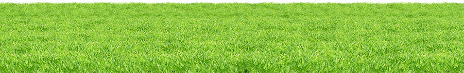 grass_PNG4934.png