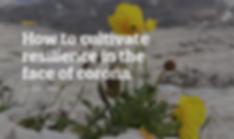 Screenshot 2020-04-02 17.36.59.png