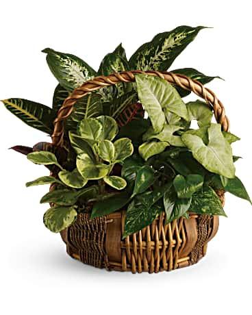 Garden Basket ~ $74.99
