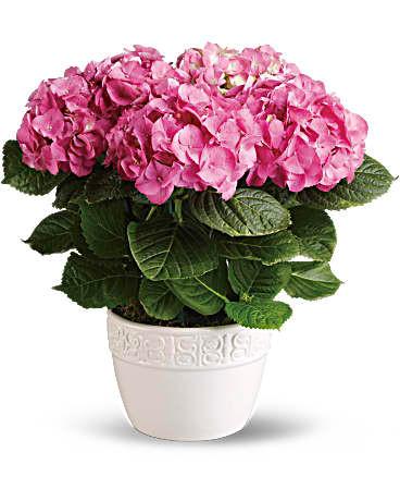 Hydrangea in 6_ Basket ~ $39.99