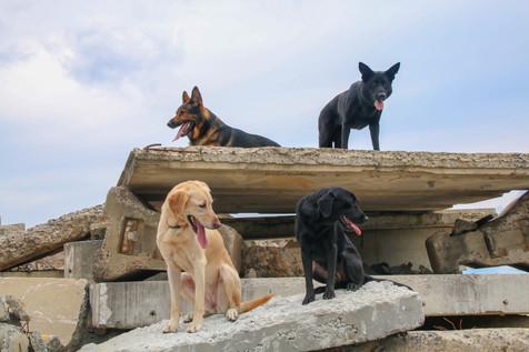 FEMA Pups-18.jpg