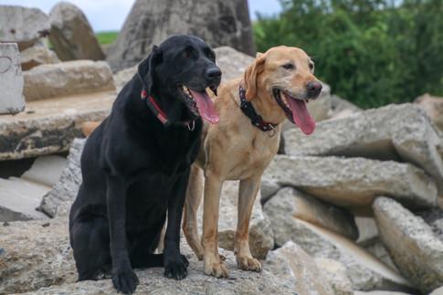 FEMA Pups-25.jpg