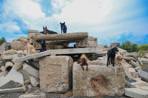 FEMA Pups-20.jpg