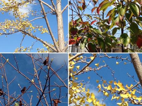 秋ですね!\(^^)/🍁