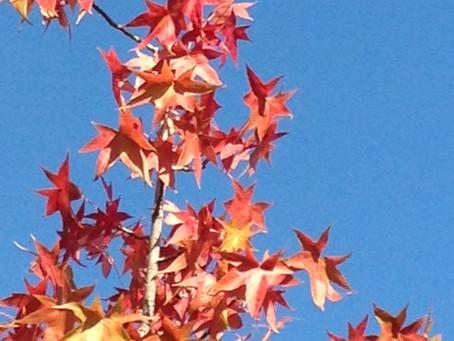 ウオーキングで見つけた秋🍁(*^▽^*)