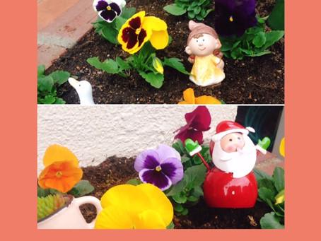 花壇のお花🌹を植え替えしました\(^-^)/