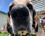 Ruby Hound Dog.jpg