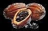Lien Cacao