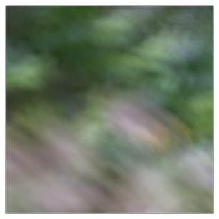 Colores del jardin-21.jpg