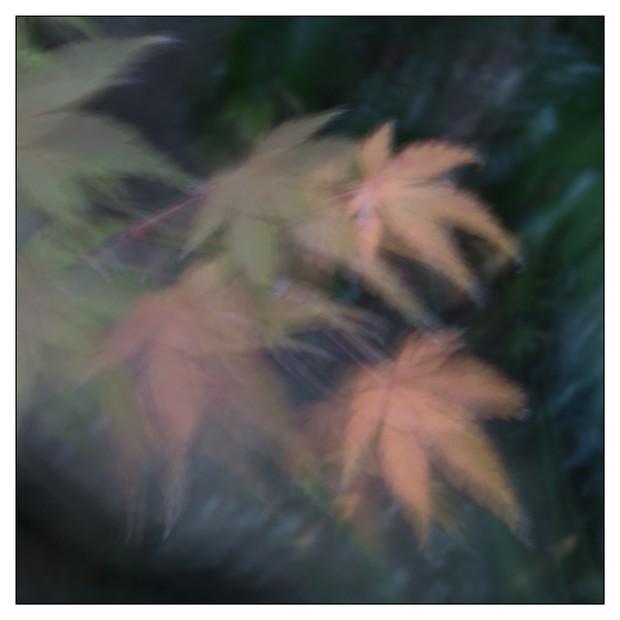 Colores del jardin-19.jpg