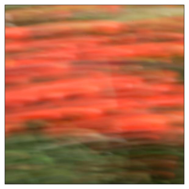 Colores del jardin-05.jpg