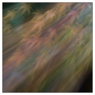 Colores del jardin-29.jpg