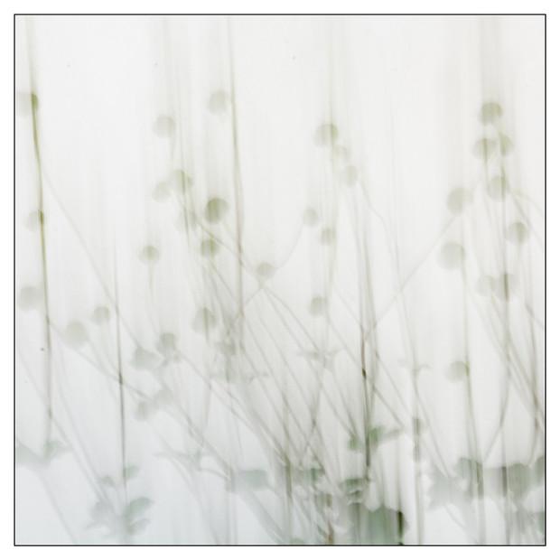 Colores del jardin-03.jpg