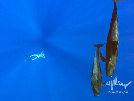 10 Reasons Why The Best Freediving is in Hawaii