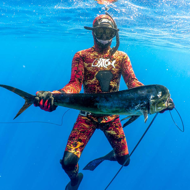 Mahimahi Pelagic Spearfishing