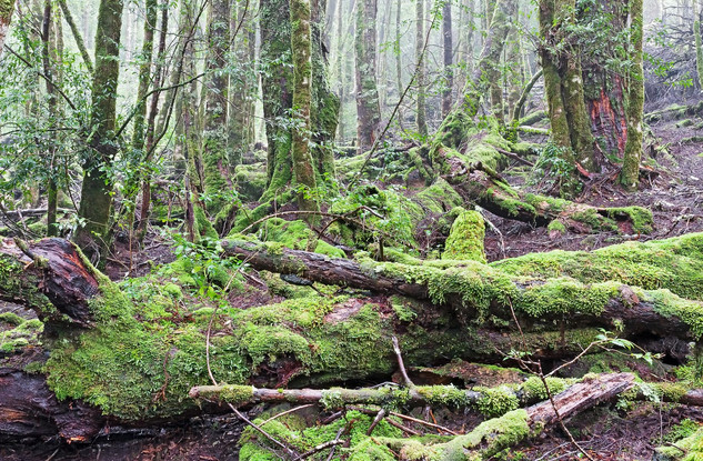 Chaos in Green - Cradle Mountain, Tasmania