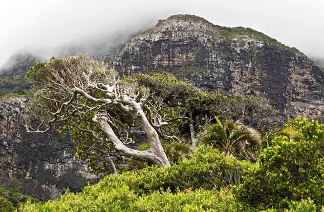 Lost in Time - Lord Howe Island, Australia
