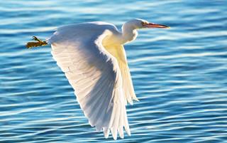 Majesty - Heron Island, Queensland