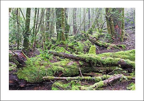 Chaos in Green - Cradle Mountain National Park, Tasmania