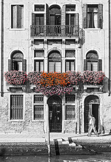Geraniums - Venice, Italy