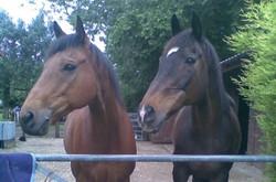 Louis & Merlin