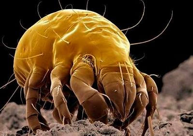 how-to-know-if-you-have-dust-mites.jpg