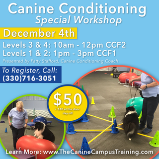 Canine Conditioning Dec 4.png
