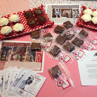 GPG volunteers run Valentine's Day Bake Sale to raise money for our our wonderful fosters!
