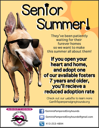 SENIOR SUMMER!! Reduced adoption fee when adopting one of our fosters who are 7+years old