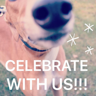 Celebrate National Adoption Weekend With Us!