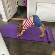 Hudson Animal Yoga.jpg