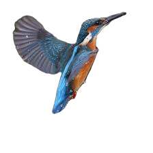 Kingfisher%20image_edited.png